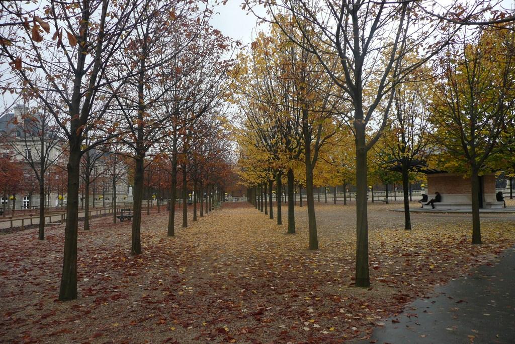 Le jardin du luxembourg paris presentement for Arbres jardin du luxembourg